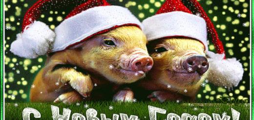Открытка С Новым годом свиньи
